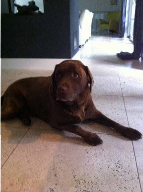 Hond met zware artrose