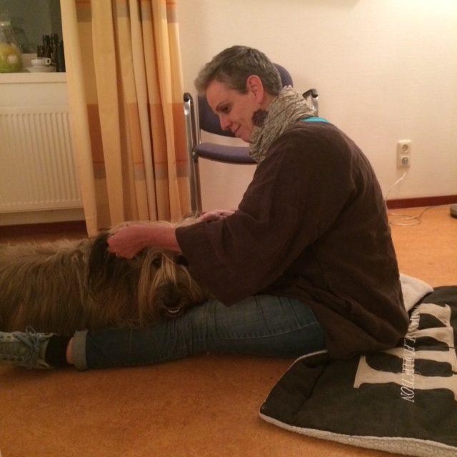 Workshop Reiki voor dieren