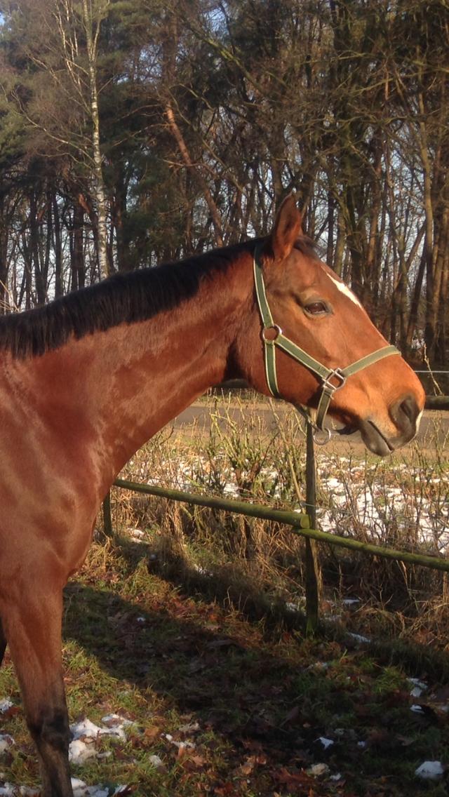 Paard met peesproblemen